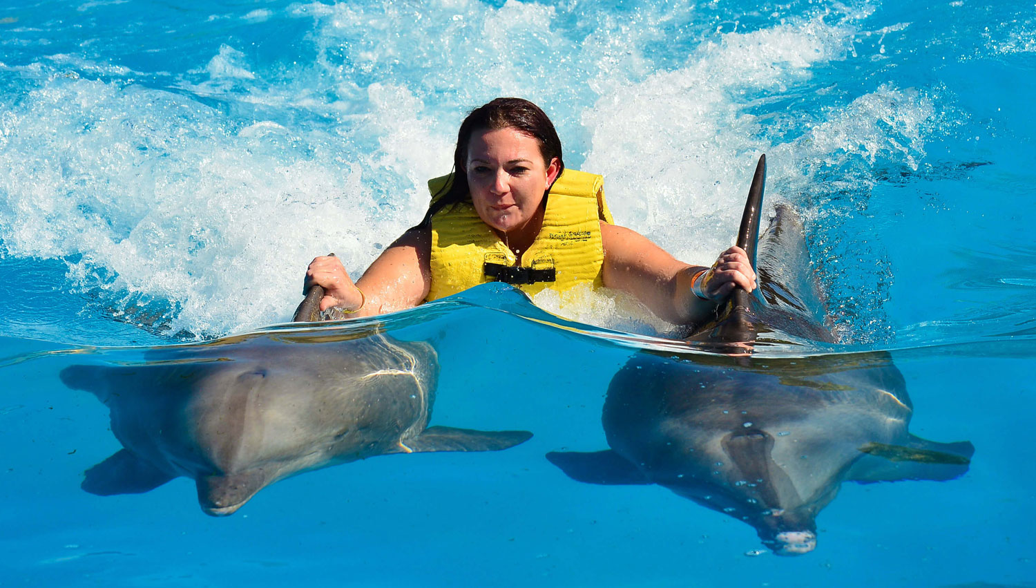 Swimming with Dolphins in Florida: 15 Unforgettable Places ...