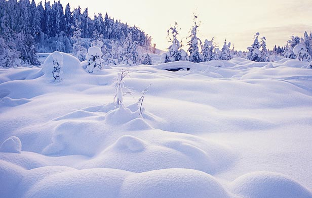 Frozen Wonders of Lapland
