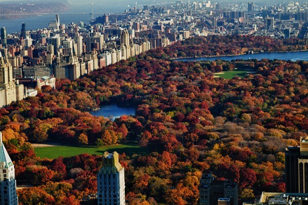 central park in autumn aerial view
