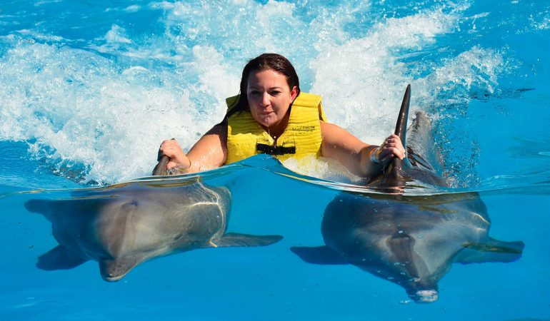 Swimming with Dolphins in Florida: 15 Unforgettable Places