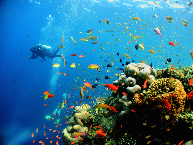 See the Marine Life by Scuba Diving