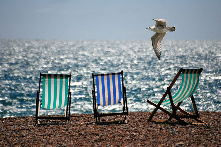 three chair in the beach and one bird